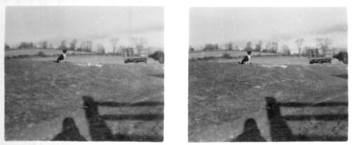 Stereoscopic Photo of a Farm Dog