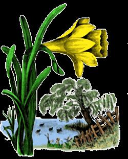 Vintage Easter Lily Illustration