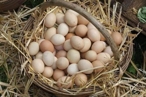 Hen Eggs in a Farm Basket