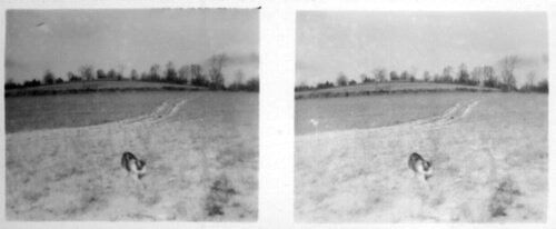Stereoscopic Photo of a Cat